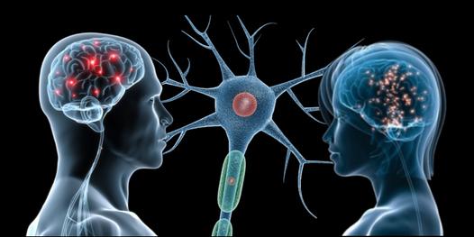 neurosociologia
